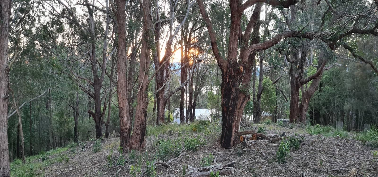 31 Hector McWilliam Drive TUROSS HEAD, NSW 2537 - photo 1